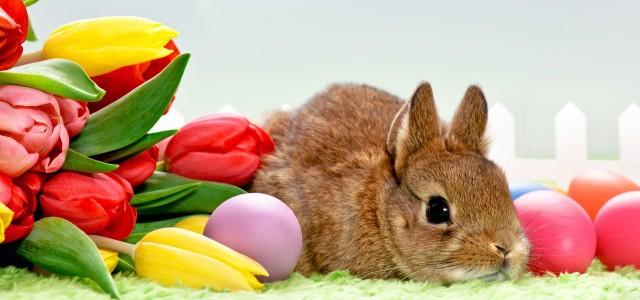 Velikonoční zvyky a nápady