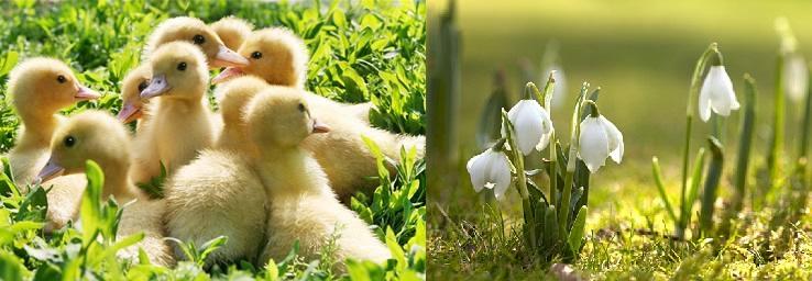 zviratka_jaro-kytky