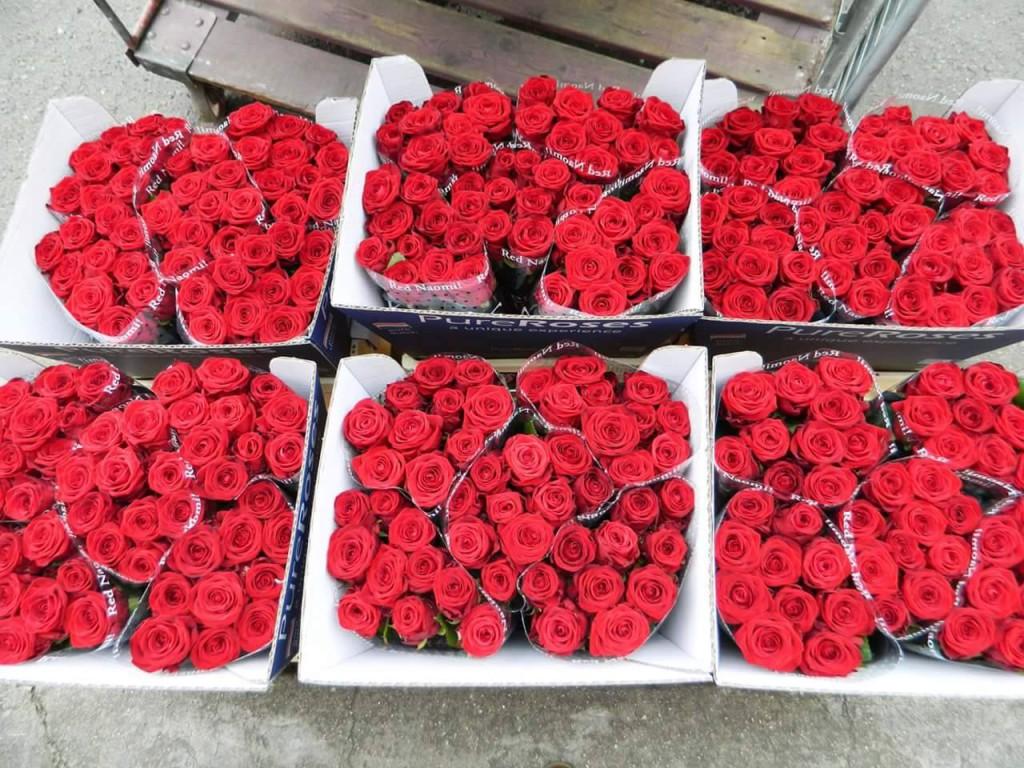 Čerstvé růže dovezené z Holandska.