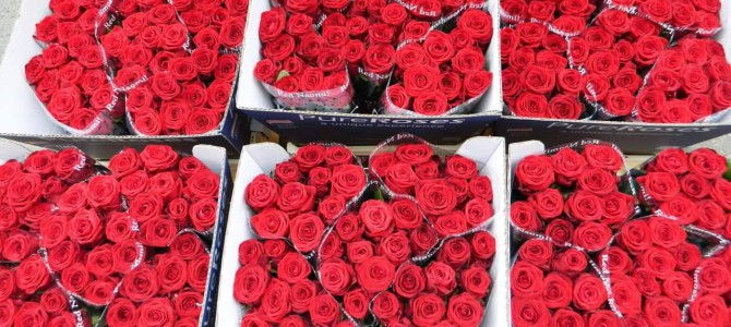 Nejkrásnější květiny z Holandska